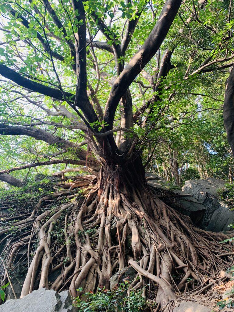 amakusa ラピュータの樹とかなんとか